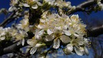 Proljece u Priboju