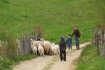 Pastiri sa Majevice