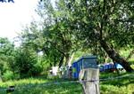 Pčelarstvo u Brijestu
