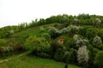 Proljece nadomak Busije