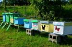 Pčelari u Priboju