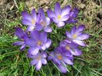 Vjesnik proljeća